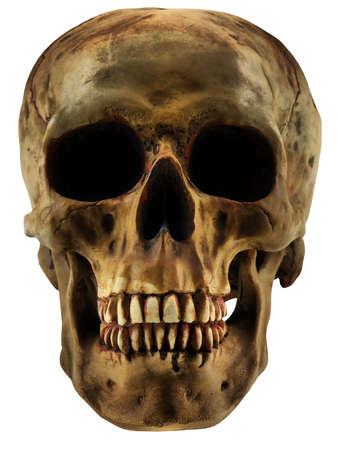 人間の頭蓋骨を白で隔離されます。 写真素材