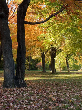 changing colors: Autumn scenery with leaves changing colors Stock Photo