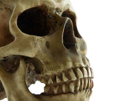 Close up of a human skull isolated on white