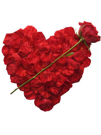 Heart shape made of red rose petals and a rose layed across it, isolated on white Banco de Imagens