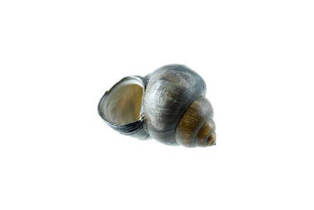 흰색 배경에 고립 된 빈 달팽이 껍질 스톡 콘텐츠