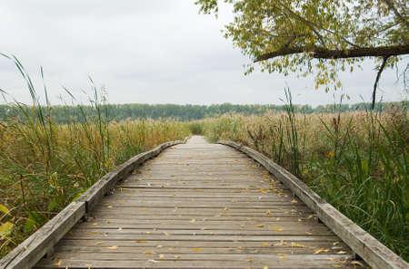 Wooden walkway through marsh land
