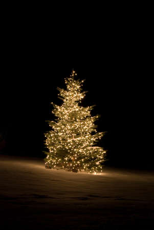 Pine tree outside lit up with Christmas lights