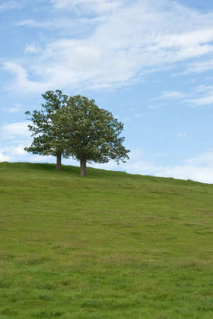 atop: Two trees atop a hill with a cloudy blue sky