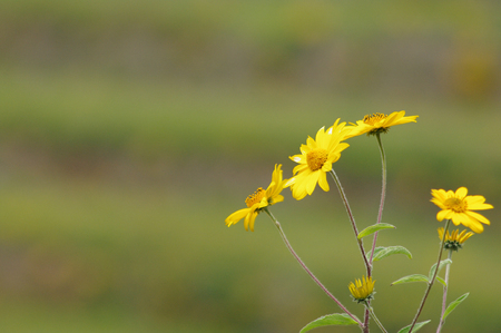 Yellow flowers on hill