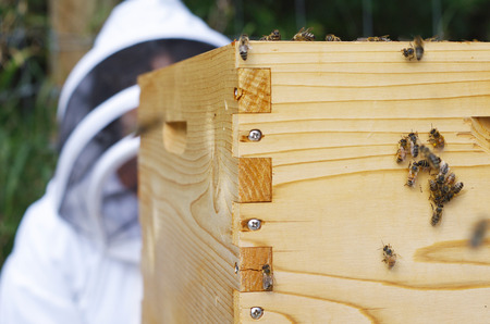 Beehive with bees and beekeeper