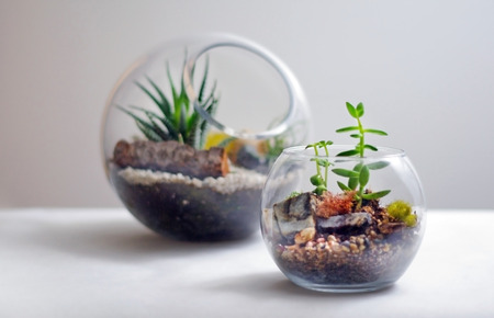 Two terrariums isolated against white background