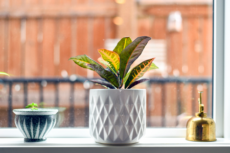 Potted plants and gold mister on window sill