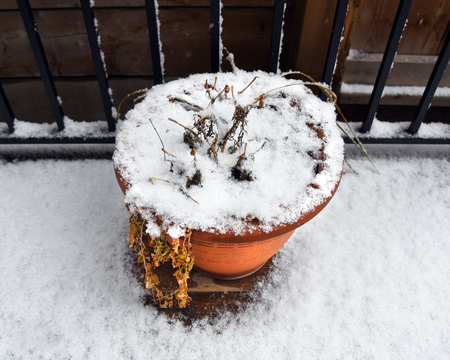 Potted plant covered in snow on deck