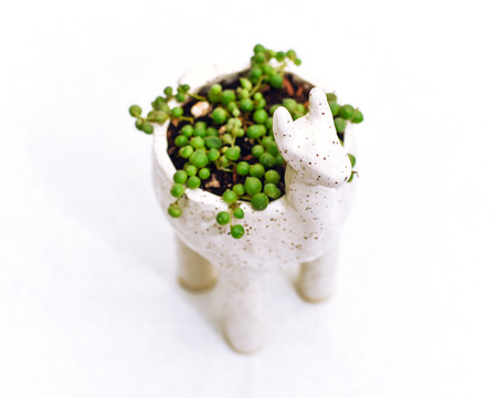 Alpaca planter with string of pearls