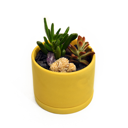 Succulents and desert rose crystal in a small yellow pot