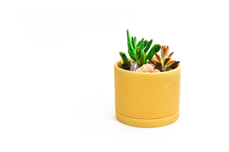 Succulents and desert rose crystal in a small yellow pot with blank white space Standard-Bild