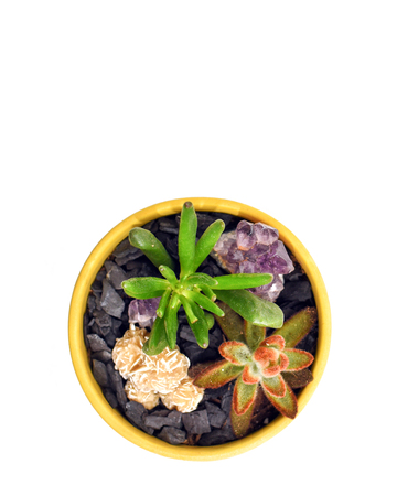 Succulents and desert rose crystal in a small yellow pot from above with blank white space