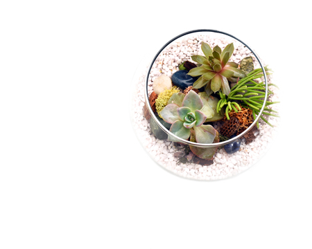 Small terrarium with green plants and white rocks shown from above with blank space