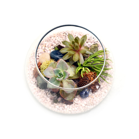 Small terrarium with green plants and white rocks shown from above on white background