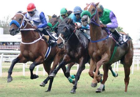 caballos corriendo: Barbados Carreras de Caballos