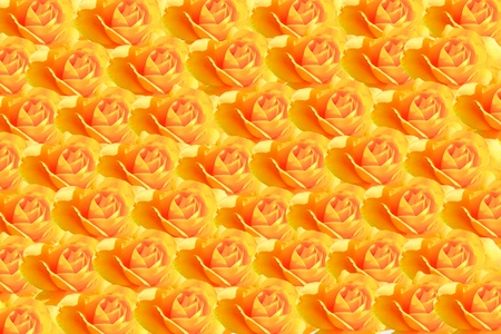 entire: The entire background of yellow roses Stock Photo