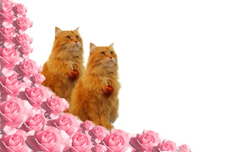 Cats in roses Stock Photo