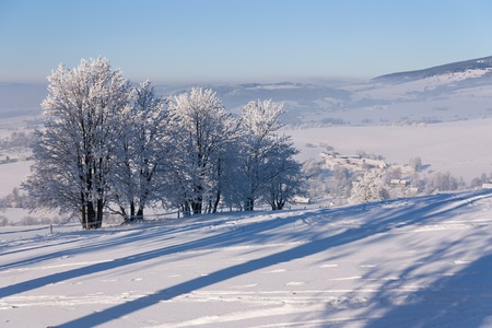 Winter trees with small town Kraliky in background Stock Photo