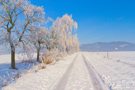 Countryside road through winter field  surrounded by snowy trees  Horizontally   Czech Republic  Stock Photo