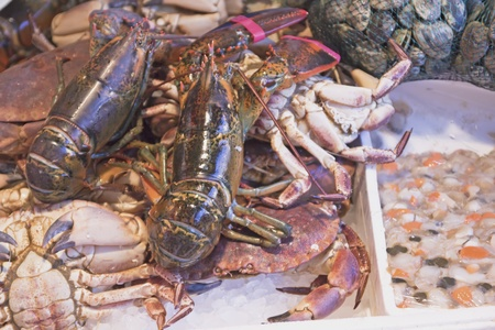 Lobster, crab, clams and shrimp ready for sale  On ice   Stock Photo - 12999409