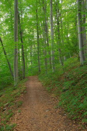 Path in a beech forest  Czech Republic  photo