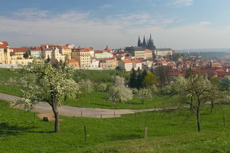 The View on the beautiful Prague gothic Castle with flowering trees and green grass  Prague, Czech Republic  photo