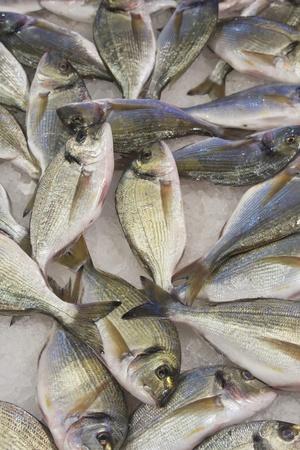 Fresh fish ready for sale  Venice,Italy Stock Photo - 13283460