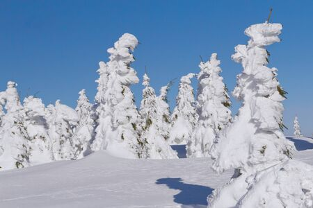 Winter view of snow covered mountain and trees with blue sky in the background  Mountains Jeseniky, Czech Republic  photo