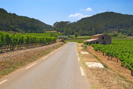The road through the vineyards  The stone house on the roadside   Provence, France  photo