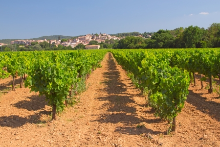 Vineyard in Provence  France   In the background is a typical Provencal village  photo