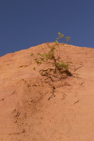 Tree growing on an orange ocher hills and blue sky in the background  Ocher rocks  French Colorado  near Rustrel  Provence, Southern France  photo