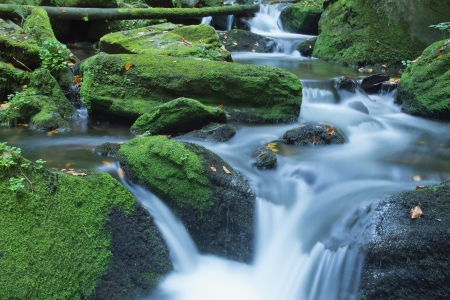 Peaceful flowing stream in the forest  Czech Republic  photo