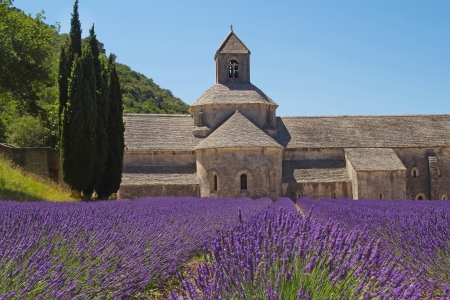 Senanque Abbey with field of lavender  Provence, France  Stock Photo