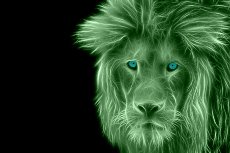 endangered species: Detailed view of the head of a lion
