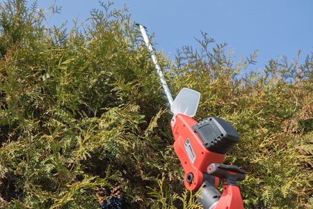 bush trimming: Cutting Thuja by electric telescopic fence scissors. Blue sky in the backgrounds. All potential trademarks are removed. Stock Photo