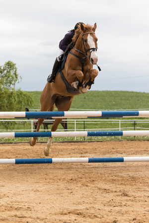 light brown horse: SVEBOHOV, CZECH REPUBLIC - MAY 23: Closeup front view of horsewoman on a light brown horse horse with flowing mane jumping at Summer Jumping Event  2015 on May 23, 2015  in Svebohov, Czech Republic. Editorial