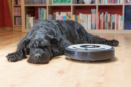 Bored Giant Black Schnauzer hond ligt naast de robot stofzuiger op de vloer. Alle potentiële handelsmerken en bedieningstoetsen worden verwijderd.