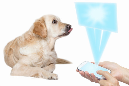 Golden Retriever Dog with protruded tongue is looking up at a blank screen transparent rectangle based on the smart phone held by female hands. All potential trademarks and buttons are removed.