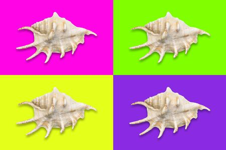 Quadrants in trendy neon yellow, green, pink and purple color with a seashell in the middle. Stock Photo