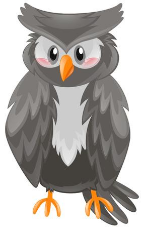 owl illustration: Owl with black feather illustration Illustration