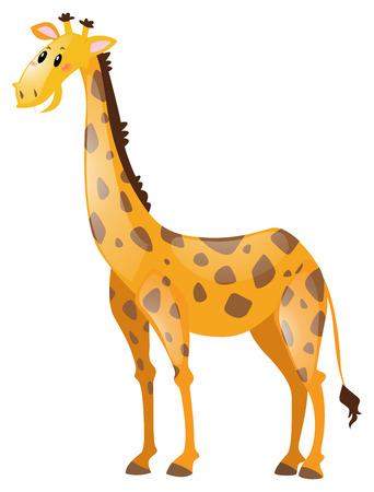 long neck: Giraffe with long neck illustration Illustration