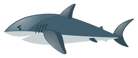 Shark on white background illustration