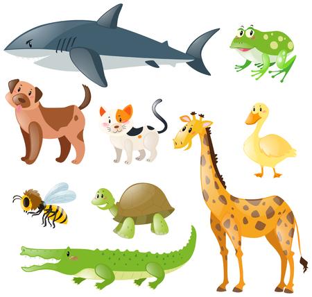 dog shark: Animals set on white background illustration