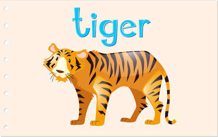 Flashcard tiger with word illustration