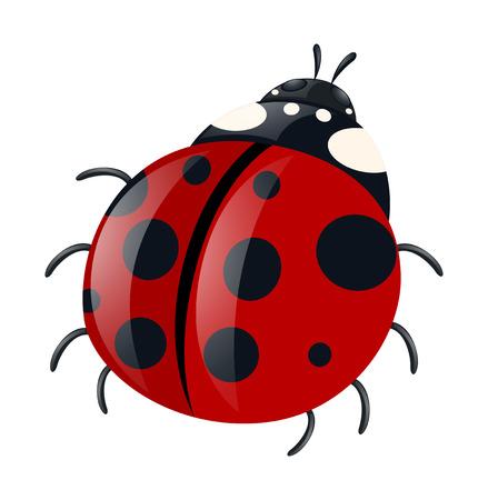 ladybug: Ladybug with red wings illustration Illustration