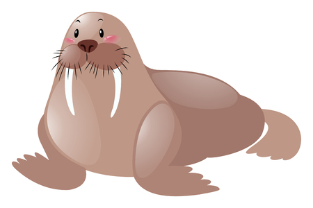 sea lion: Cute sea lion on white background illustration