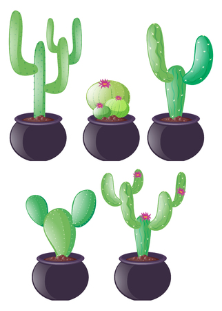 types of cactus: Different types of cactus in clay pots illustration Illustration