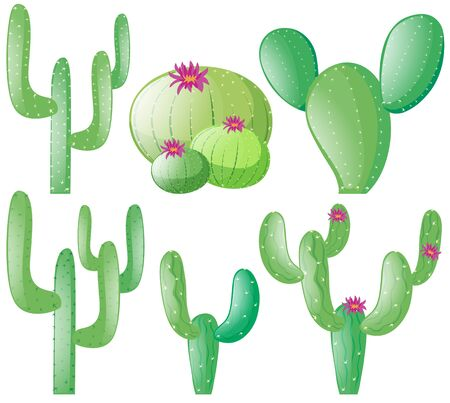 types of cactus: Different types of cactus illustration Illustration