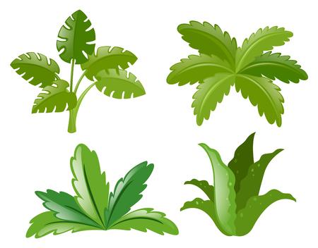 Four different kinds of plants illustration Illustration